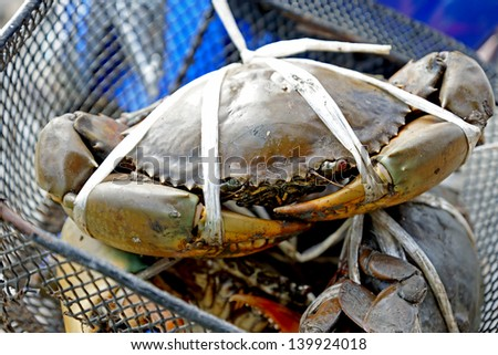 Serrated mud crabs - Thailand - stock photo