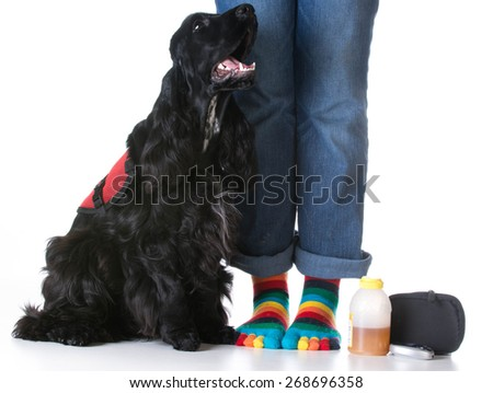 service dog - diabetic trained service dog sitting beside owner - stock photo