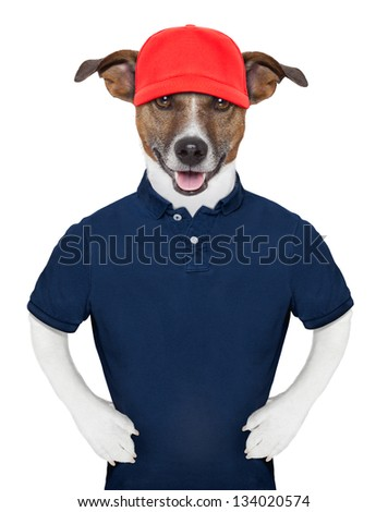 Service dog wearing a blue polo and a red cap - stock photo