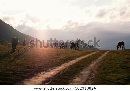 ses grazing in the meadow on a background of mountains in the sunset / Horses at sunset / horses - stock photo