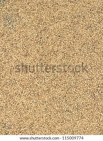 Sesame background  .Close-up - stock photo