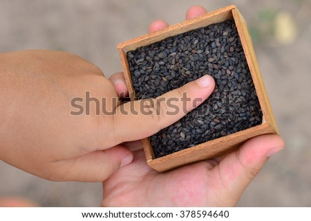 Sesame seed in hand.Selective focus of some parts. - stock photo