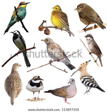 Set birds isolated on white background, texture - stock photo
