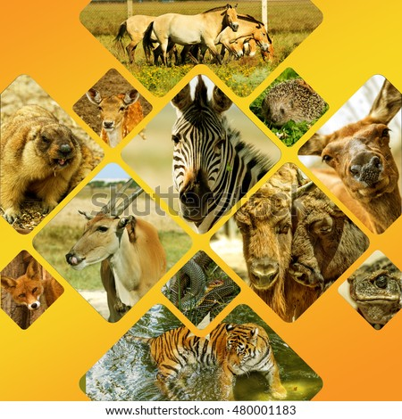 Set Collage Brochure On Safari With Wild Animals Tourist Leaflet A Clean