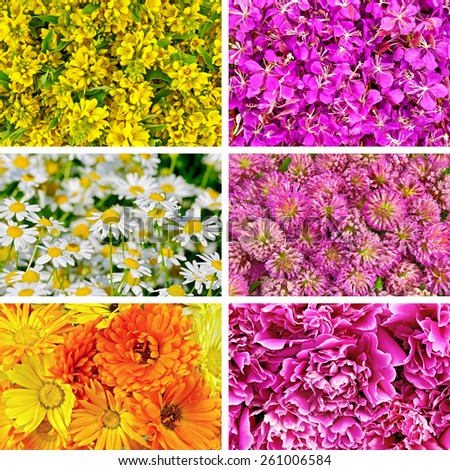 Set flowers texture loosestrife, fireweed, chamomile, clover, calendula and peony - stock photo
