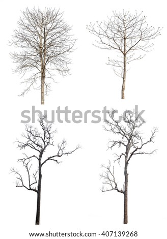 Set four of  dry tree isolated on white