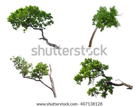 Set four of  tree isolated on white - stock photo