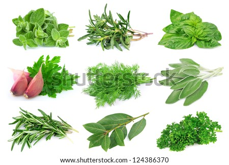 Set from green spice on white background.
