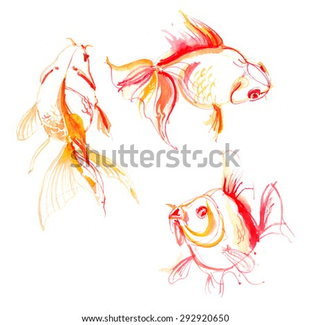 Set goldfish painted with watercolors. Study of fish. - stock photo
