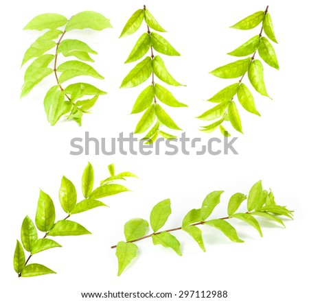 Set leaves isolated on white background