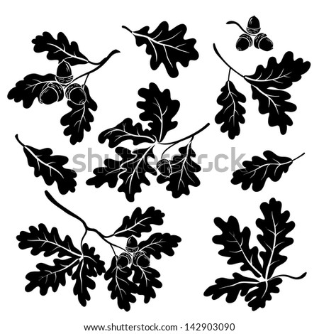 Set oak branches with leaves and acorns, black silhouettes on white background. - stock photo