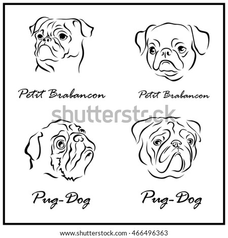 Set of a Illustration shows a dog breeds. Petit Brabancon, Pug-dog