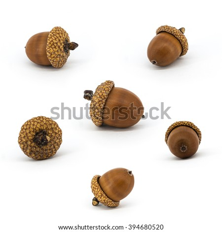 Set of acorns isolated on white background - stock photo