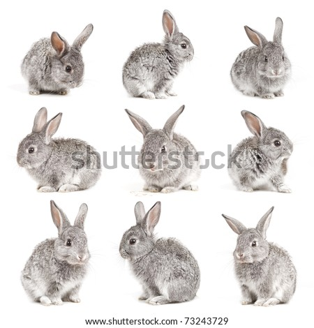 Set of adorable cute rabbits sit on white background
