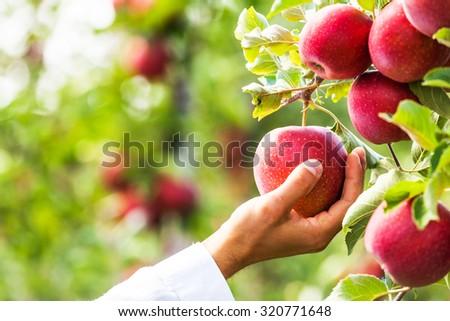 fruit growing stock images royalty free images vectors shutterstock. Black Bedroom Furniture Sets. Home Design Ideas