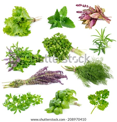 Set of aromatic herbs and spices isolated on white background - stock photo