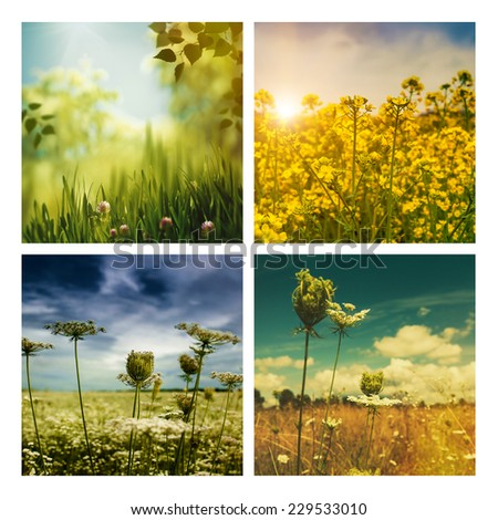 Set of assorted autumnal backgrounds for your design - stock photo