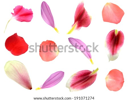 set of 12 assorted flower petals: rose, chrysanthemum and lily, carnation, magnolia - stock photo