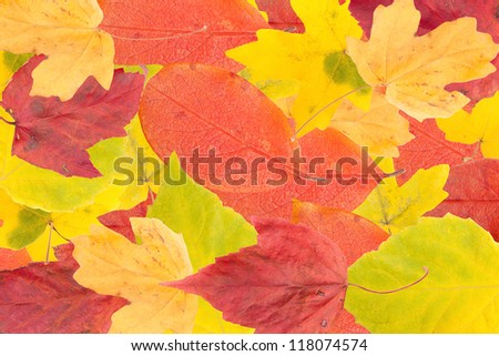 Set of autumn leaves of different color close up.