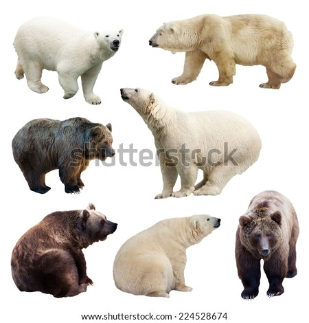Set of bears over white background