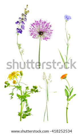 Set of beautiful meadow flowers, isolated on white - stock photo