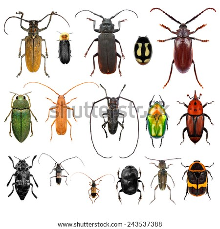 Set of beetles isolated on a white background  - stock photo