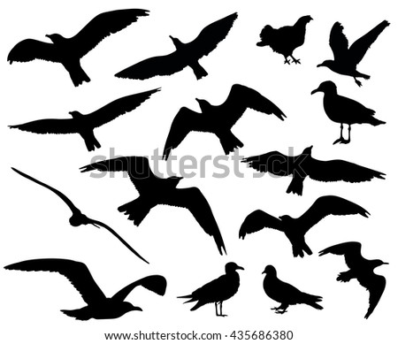 Set of birds silhouettes 15 in 1 on white background - stock photo