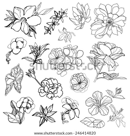 Set of black floral design elements - sketches of flowers - stock photo