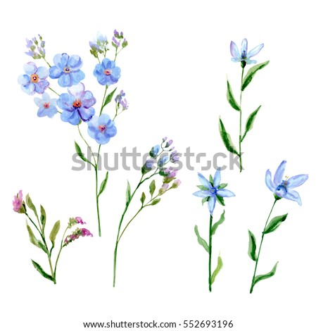 Set blue flowers forgetmenot tweedia stem stock illustration set of blue flowers forget me not tweedia stem and leaves ccuart Image collections