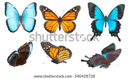 Set of blue morpho, monarch and Sea Green Swallowtail butterflies isolated on white background - stock photo