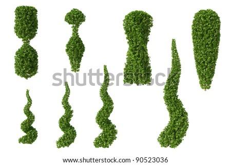 Set of Boxwood trees isolated on white background - stock photo