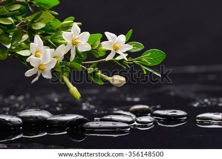 Set of branch gardenia flower on pebbles  - stock photo