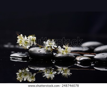 Set of branch tropical flower with therapy stones - stock photo