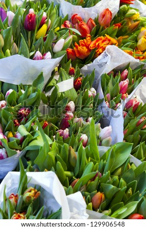 Set of bright tulips