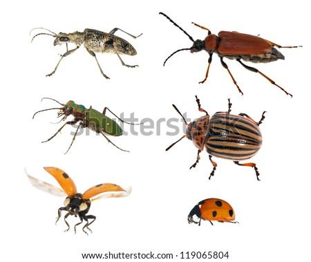 set of bugs isolated on white background - stock photo