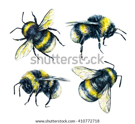 Entomology Stock Photos Royalty Free Images Amp Vectors