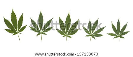 Set of cannabis leaves isolated on white - stock photo