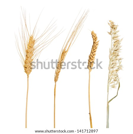 set of cereals isolated on white background