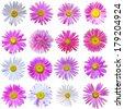 set of 16 chamomile flowers isolated white - stock photo