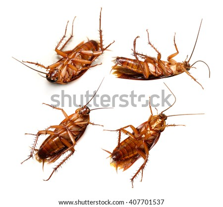 Set of Cockroach isolated on a white background