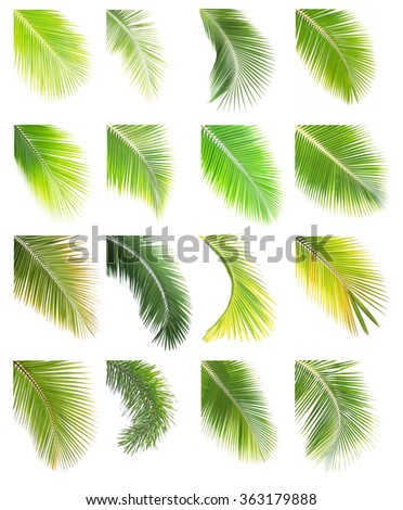 Set of coconut and palm leaf isolated on white background - stock photo