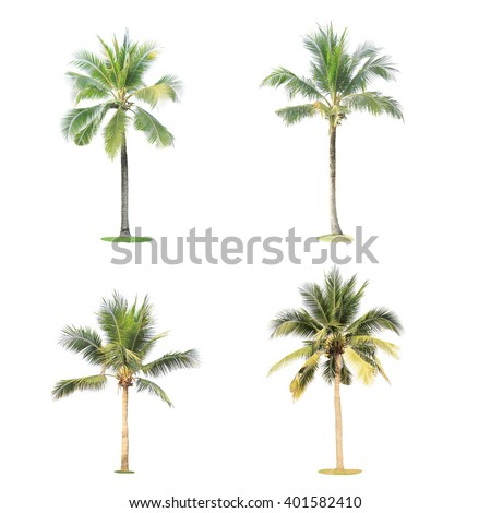 Set of coconut tree isolated - stock photo