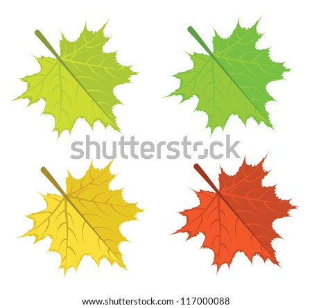 Set of colorful bright maple leaves on white background. - stock photo