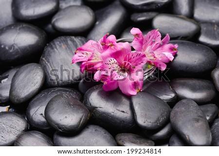 Set of colorful gerbera flowers  - stock photo