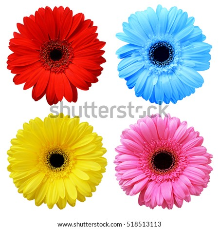 gerbera stock images, royaltyfree images  vectors  shutterstock, Beautiful flower