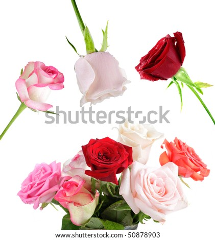 Set of colorful rose isolated on white