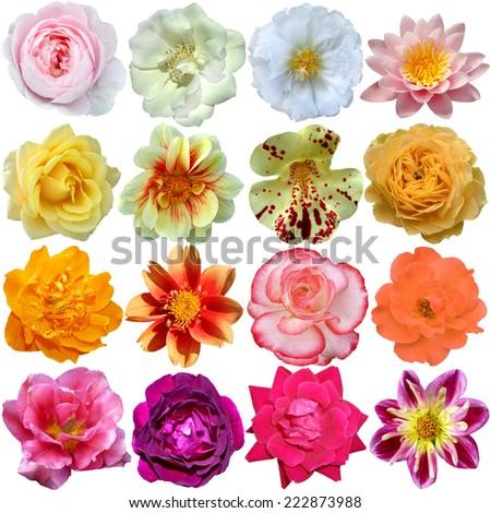 Set of colorful seasonal blooms  - stock photo