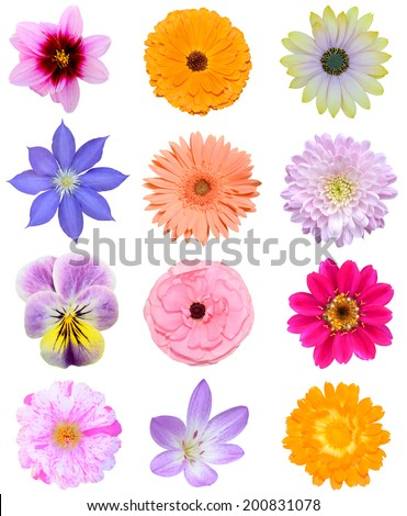 Set of colorful summer flowers blooming, isolated white