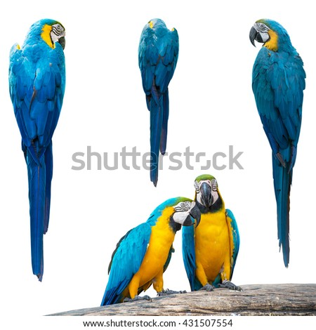 Set of Colourful parrot isolated on white - stock photo