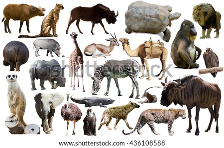 Set of different African animals isolated over white - stock photo